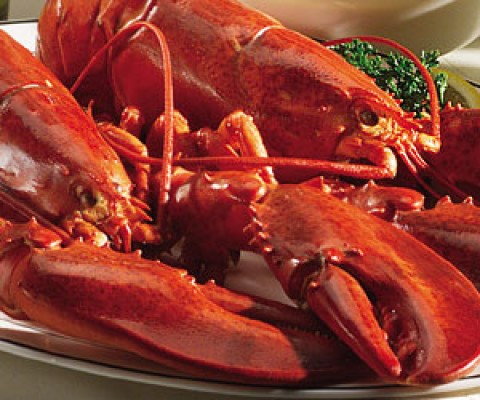 1.5 lb Live Maine Lobsters