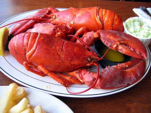 3 lb Live Maine Lobsters