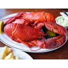 1.75 lb Live Maine Lobsters