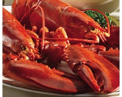 1.25 lb Live Maine Lobsters