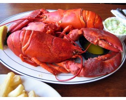 2.5 lb Live Maine Lobsters